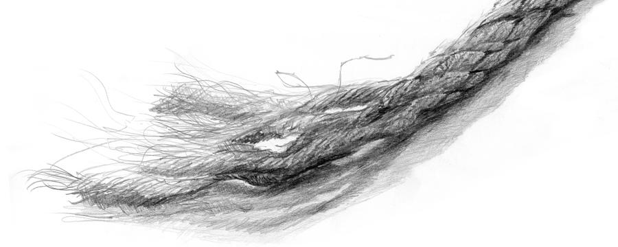 Tau, Rope, sketch, drawing
